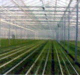 Polycarbonate Greenhouse Sheet